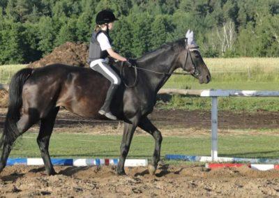oboz-konie-2015-3-0244