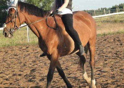 oboz-konie-2015-3-0260