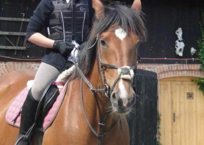 oboz-konie-2015-4-0015