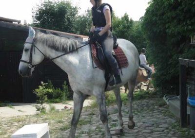 oboz-konie-2015-4-0020