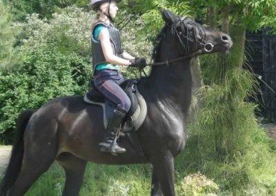 oboz-konie-2015-4-0021