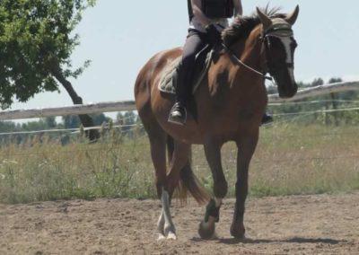 oboz-konie-2015-5-0010