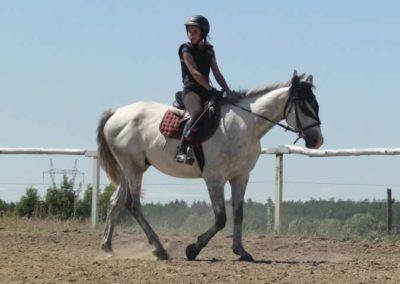 oboz-konie-2015-5-0011