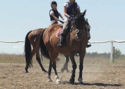 oboz-konie-2015-5-0021
