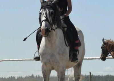 oboz-konie-2015-5-0030