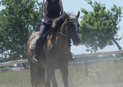 oboz-konie-2015-5-0033