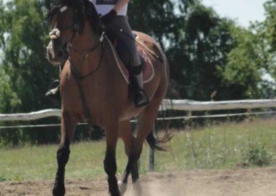 oboz-konie-2015-5-0040
