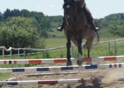 oboz-konie-2015-5-0099