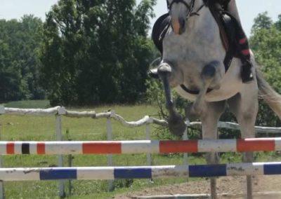 oboz-konie-2015-5-0119