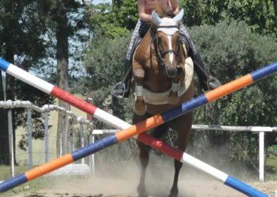 oboz-konie-2015-5-0160