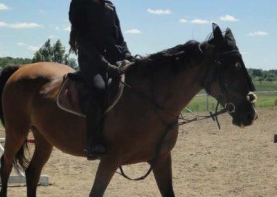 oboz-konie-2015-5-0177