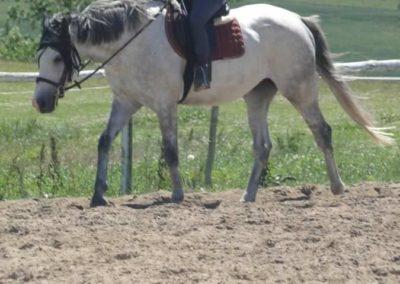 oboz-konie-2015-5-0180