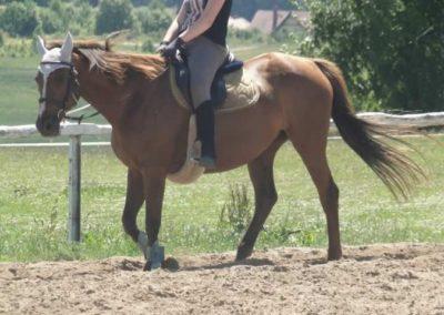 oboz-konie-2015-5-0181