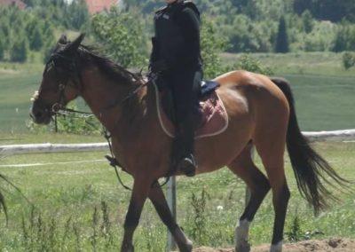 oboz-konie-2015-5-0184