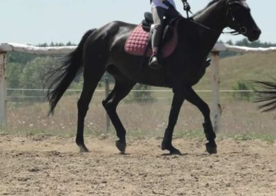 oboz-konie-2015-5-0192