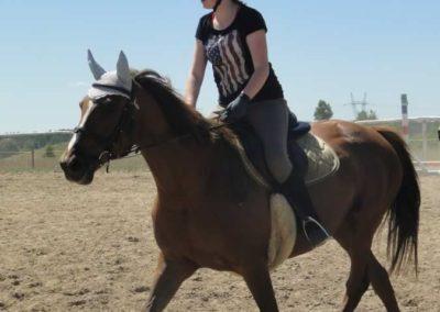 oboz-konie-2015-5-0193