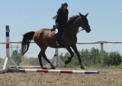 oboz-konie-2015-5-0239