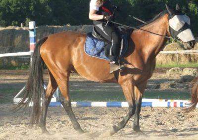 oboz-konie-2015-5-0249