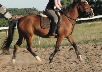 oboz-konie-2015-5-0273