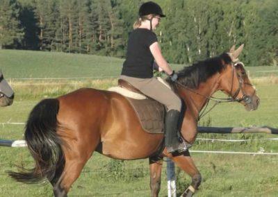 oboz-konie-2015-5-0276