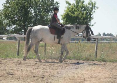 oboz-konie-2015-6-0001