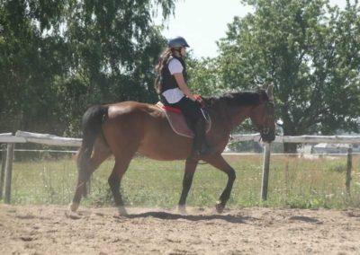 oboz-konie-2015-6-0002