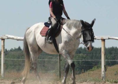 oboz-konie-2015-6-0003