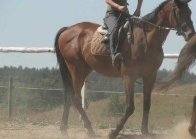 oboz-konie-2015-6-0007