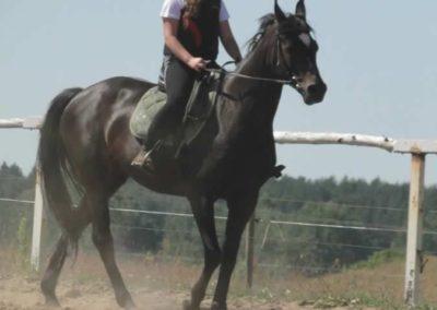 oboz-konie-2015-6-0008