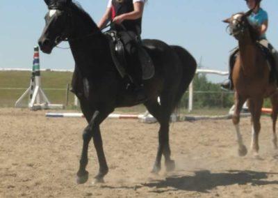 oboz-konie-2015-6-0009