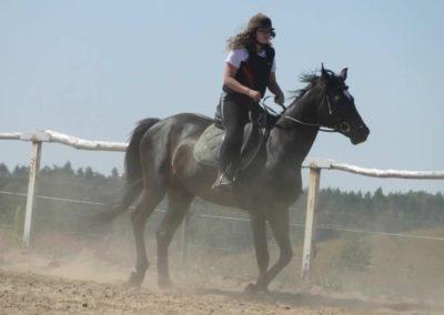 oboz-konie-2015-6-0018