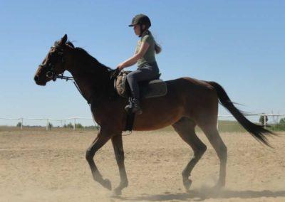 oboz-konie-2015-6-0020