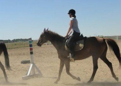 oboz-konie-2015-6-0026
