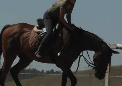 oboz-konie-2015-6-0030