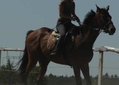 oboz-konie-2015-6-0032