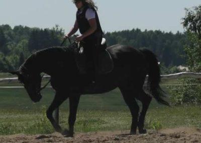 oboz-konie-2015-6-0034