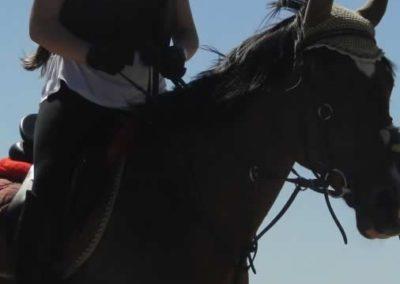 oboz-konie-2015-6-0035