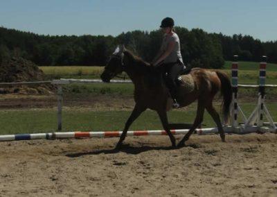 oboz-konie-2015-6-0037