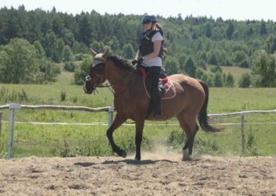 oboz-konie-2015-6-0040
