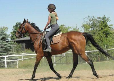 oboz-konie-2015-6-0049