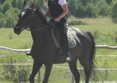 oboz-konie-2015-6-0052