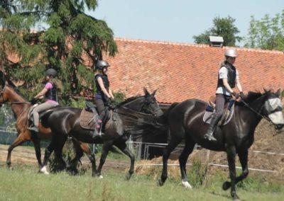 oboz-konie-2015-6-0079