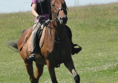 oboz-konie-2015-6-0087