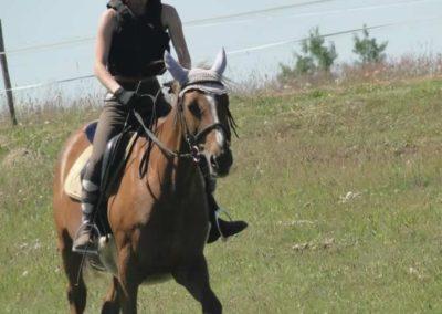 oboz-konie-2015-6-0088