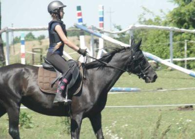 oboz-konie-2015-6-0089