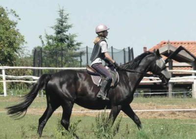 oboz-konie-2015-6-0090