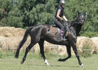 oboz-konie-2015-6-0091