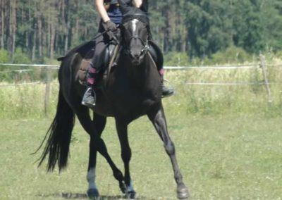 oboz-konie-2015-6-0092