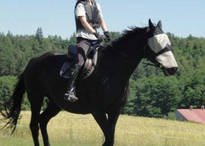 oboz-konie-2015-6-0096