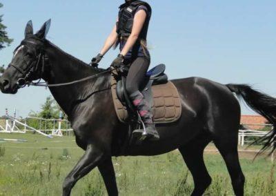 oboz-konie-2015-6-0097